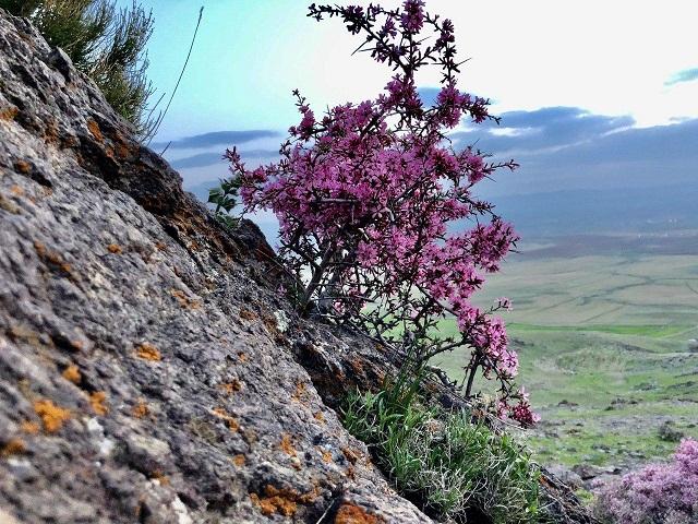 دانلود آهنگ ملک لرده شاهید از پرویز بولبوله و تورکان ولیزاده Meleklerde Sahid